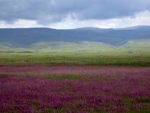 Verre berg en bloemoverzees royalty-vrije stock foto