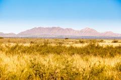 Verre Bushland royalty-vrije stock foto