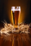 Verre de bière avec des oreilles d'orge Photographie stock