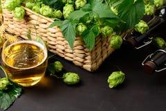 Verre de bière avec les houblon et les oreilles verts de blé sur la table en bois foncée Images libres de droits