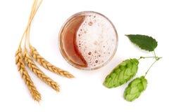 Verre de bière mousseuse avec le houblon et le blé en cônes d'isolement sur le fond blanc Vue supérieure Photos libres de droits