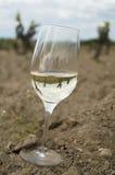 Verre de vin blanc sur un sol de vignoble Images libres de droits
