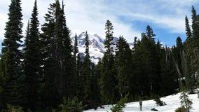 Verre Mening van MT Regenachtiger van sneeuw wandelingssleep met evergreens royalty-vrije stock fotografie