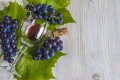 Verre non fini de vin rouge et de raisins noirs avec des feuilles Photo libre de droits
