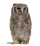 Verreaux S Eagle-owl - Bubo Lacteus Stock Photo
