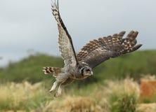Verreaux& x27; s Eagle sowa Zdjęcie Stock