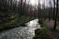 Verreries's brook from the Mervent's forest Stock Image