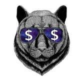 Verres de port de chat sauvage de puma de puma de panthère avec l'illustration de symbole dollar avec l'animal sauvage pour le T- illustration de vecteur