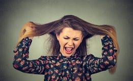 Verärgerte Frau, die ihr heraus schreiendes Haar zieht Stockfotos