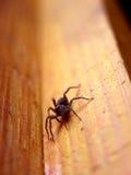 Verärgerte Spinne, die nach Ihnen kommt Stockfoto