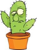 Verärgerter Kaktus Stockbilder