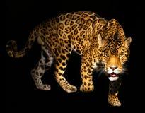 Verärgerter Leopard Stockfoto
