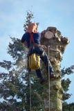 Verringern des Baums mit einer Kettensäge #1 stockfotos