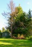 Verringern eines Baums Stockfotografie