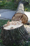 verringern Sie Baum Stockfoto