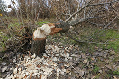 Verringern Sie Baum Stockfotografie