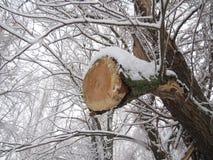 Verringern Sie einen Baum Stockbild