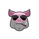 Verro arrabbiato Testa del maiale con i vetri e una sigaretta Fattoria degli animali i Fotografia Stock Libera da Diritti