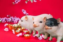 Verro del maiale con il fiore del fiore di ciliegia, 2019 nuovi anni cinesi immagine stock