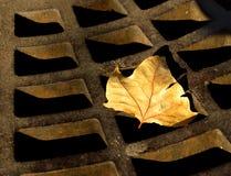 Verrosteter Herbst stockbild