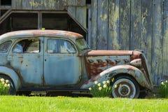 Verrostetes altes Auto und Narzissen stockfoto