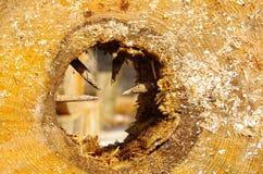 Verrottete hohle Mitte einer Runde des Holzes Stockbild