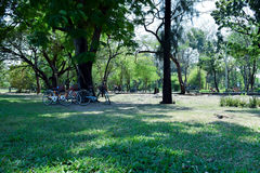 Verrotting Fai Park royalty-vrije stock foto's