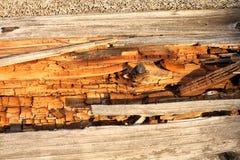 Verrotting op dood hout stock afbeeldingen