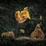 Verrottungs-Kürbis Stockbild