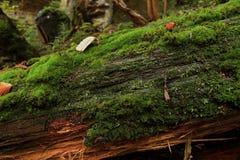 Verrottungsbaum bedeckt Stockbilder