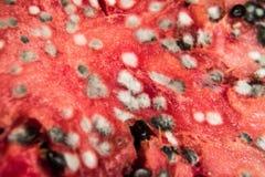 Verrottungswassermelone Lizenzfreie Stockfotos