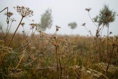 Verrucosus Euonymus Στοκ Φωτογραφίες