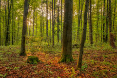 Verrukt Autumn Bavarian Forrest royalty-vrije stock foto's