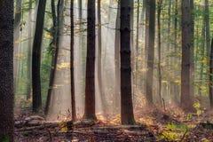 Verrukt Autumn Forest royalty-vrije stock afbeelding