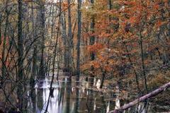 Verrukt Autumn Forrest stock afbeelding