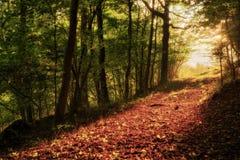 Verrukt Autumn Forrest stock afbeeldingen
