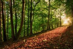 Verrukt Autumn Forrest royalty-vrije stock foto