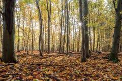 Verrukt Autumn Forrest royalty-vrije stock afbeeldingen
