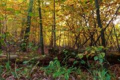 Verrukt Autumn Forrest stock foto's
