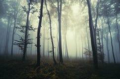 Verrukt bos met mist in de herfst stock fotografie
