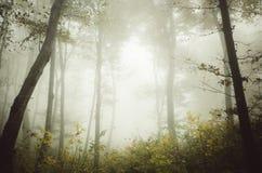 Verrukt bos met mist in de herfst royalty-vrije stock afbeelding