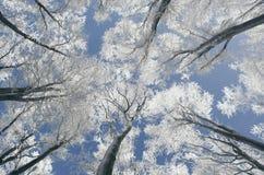 Verrukt de winterbos op Kerstmisdag stock foto