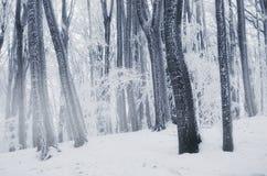 Verrukt de winterhout met bevroren bomen stock afbeelding