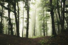 Verrukt groen bos met mist royalty-vrije stock foto