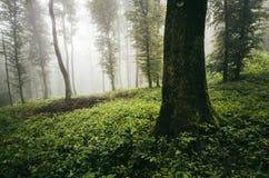 Verrukt magisch groen bos met mist royalty-vrije stock afbeeldingen