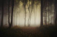 Verrukt nevelig de herfstbos op regenachtige dag stock fotografie
