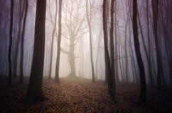 Verrukte boom in geheimzinnig bos met mist Royalty-vrije Stock Afbeeldingen