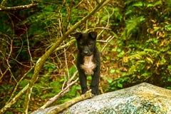 Verry leuk van de puppyhond bevindt zich in het boszoogdier Hond Huisdier Portret reuk Canis Lupus binnenlandse hond royalty-vrije stock foto