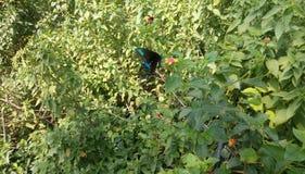 Verry mooie kleurrijke vlinder royalty-vrije stock foto's