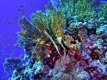 Versão do recife coral/HDR Fotografia de Stock